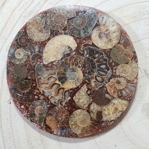 ammonite fossil plaque